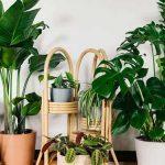 Các loại cây trồng trong nhà theo phong thủy hợp tuổi hút tài lộc, sức khỏe, may mắn