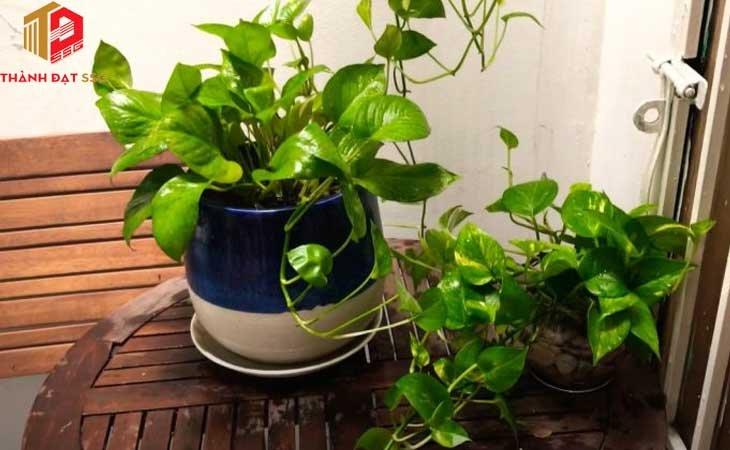 các loại cây trồng trong nhà theo phong thủy